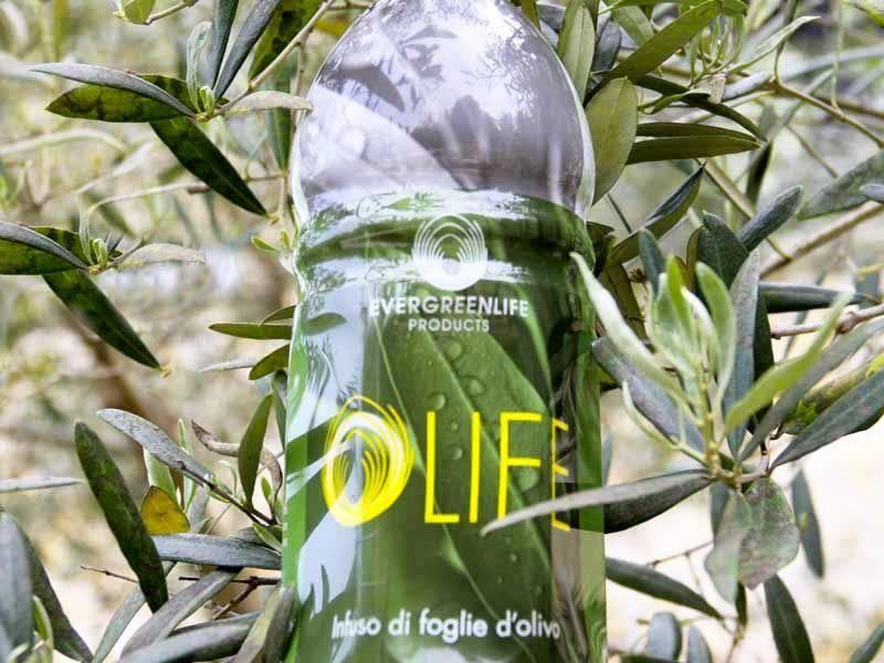 Evergreen Life azienda italiana