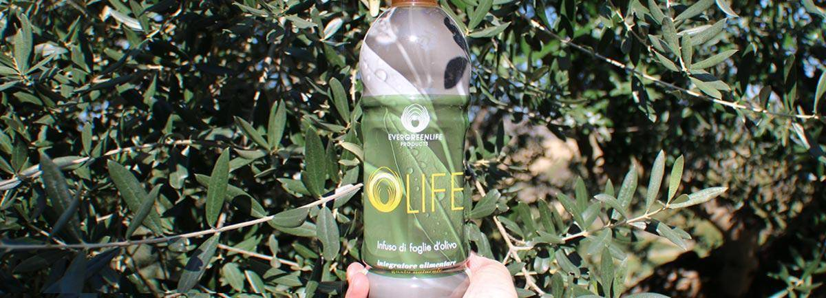 Olife Evergreen Life infuso di foglie di olivo
