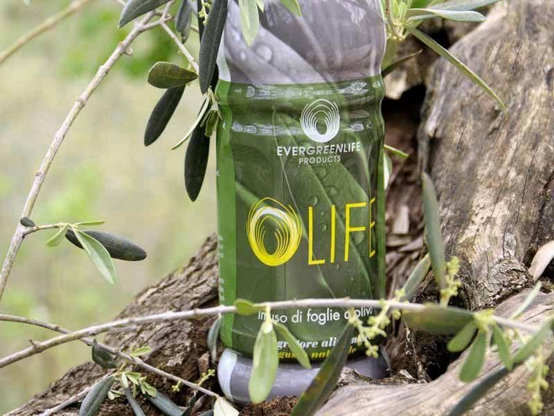 Olife e le foglie di olivo